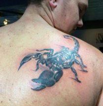 Schorpioen op schouder