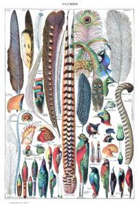 Types_de_plumes._-_Larousse_pour_tous,_-1907-1910-