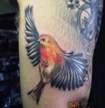 Vogel op onderbeen