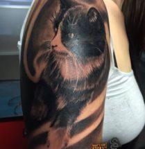 Kat op bovenarm
