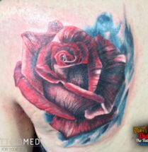 Roos op schouderblad