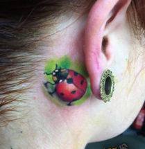 Lieveheersbeestje achter oor