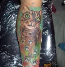 Kat portret op onderbeen